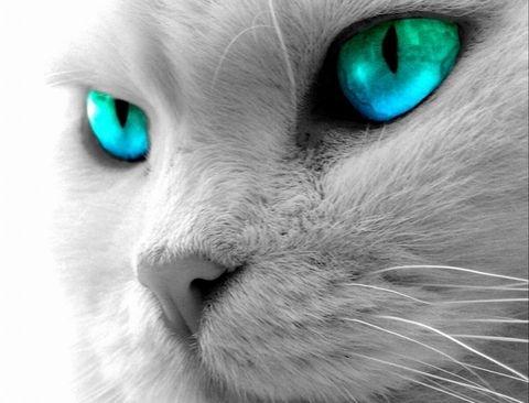 Магия кошки