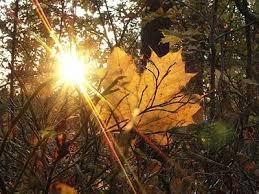 Чудное время – осень!